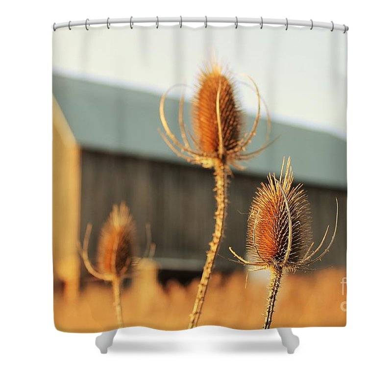 Fine Art Photography Shower Curtain featuring the photograph Play On Focus by Anthony Djordjevic