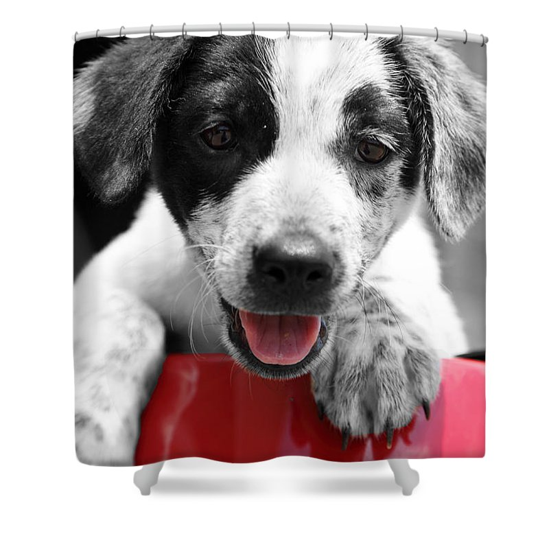 Puppy Shower Curtain featuring the photograph Playing by Amanda Barcon