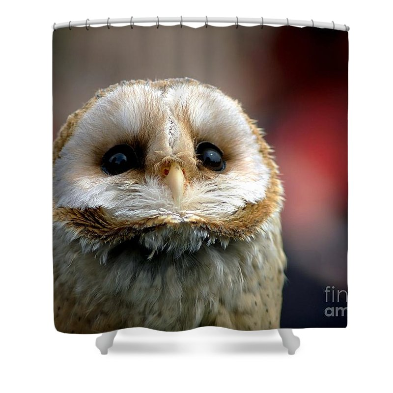 Wildlife Shower Curtain featuring the photograph Please by Jacky Gerritsen