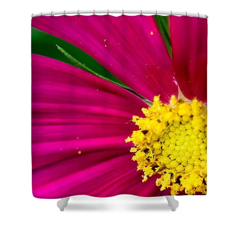 Plink Shower Curtain featuring the photograph Plink Flower Closeup by Michael Bessler