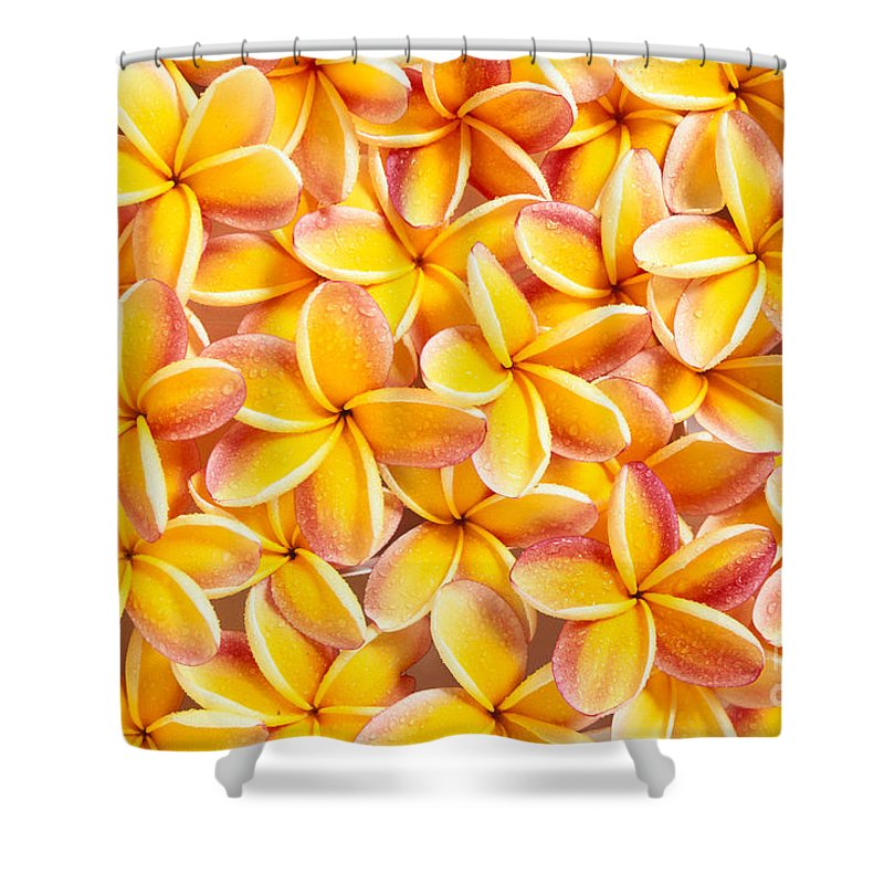Arrange Shower Curtain featuring the photograph Plumeria Flowers by Kyle Rothenborg - Printscapes