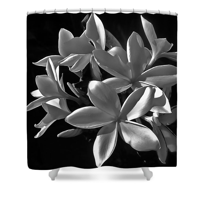 Photograph Of Plumeria Shower Curtain featuring the photograph Plumeria Proper Evening by Gwyn Newcombe