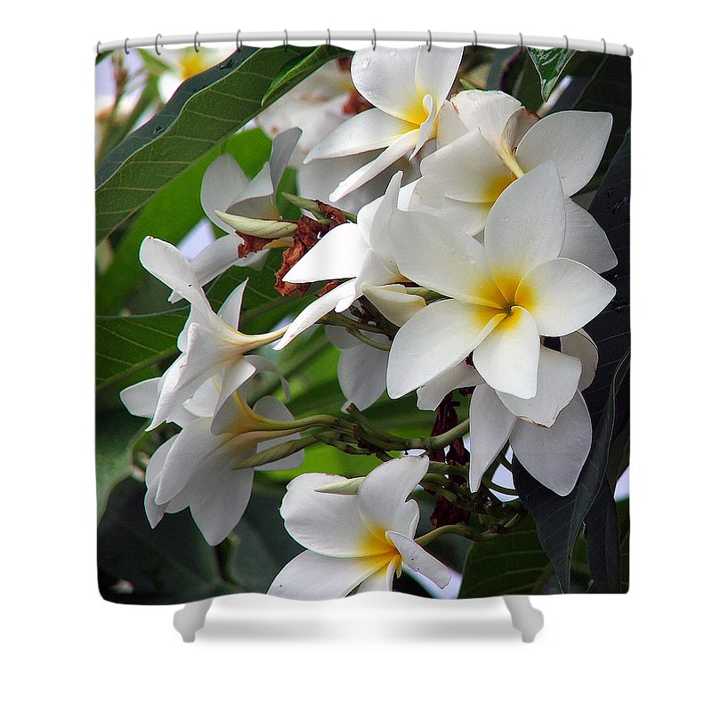 Flower Shower Curtain featuring the photograph Plumeria by Robert Meanor