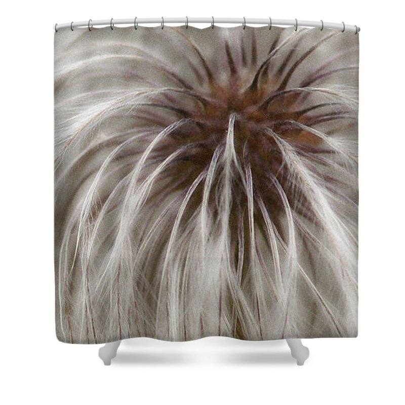 Plume Shower Curtain featuring the photograph Plumosa by Linda Shafer