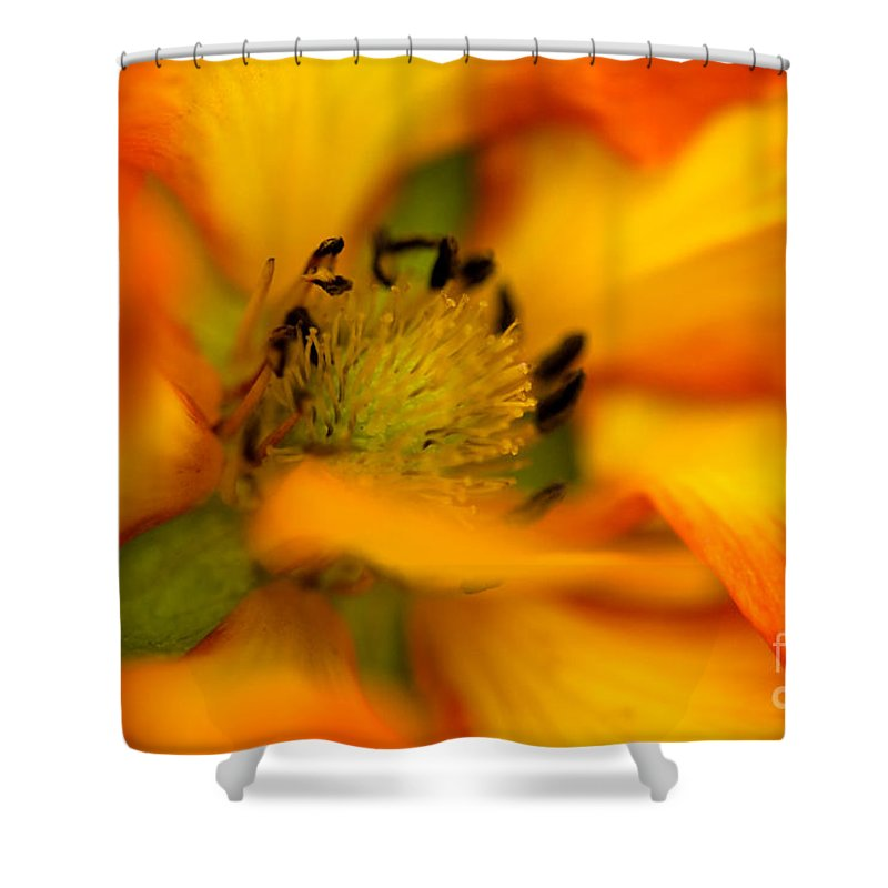 Botanical Shower Curtain featuring the photograph Plush Petals by Venetta Archer