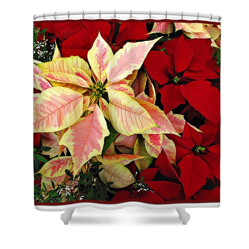 Poinsetta Shower Curtain featuring the photograph Poinsetta Greetings by Joan Minchak