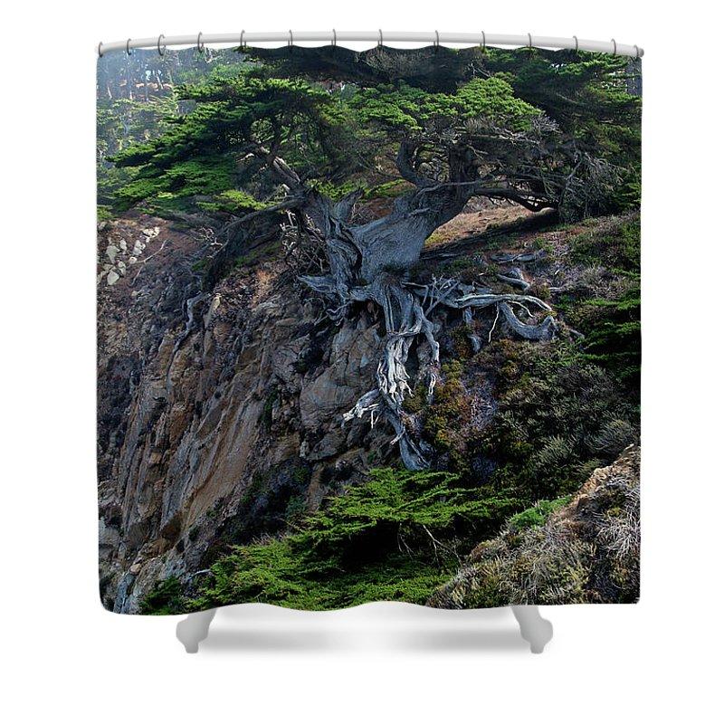 Cypress Shower Curtains