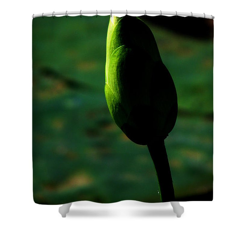 Lotus Shower Curtain featuring the photograph Poised For Greatness by Amanda Barcon