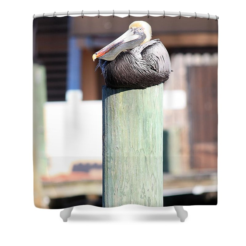 Wildlife Shower Curtain featuring the photograph Pole Top Pelican by Carol Groenen