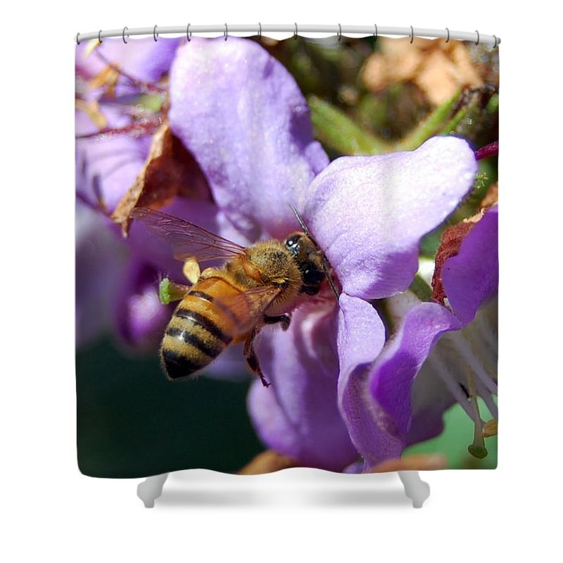 Flower Shower Curtain featuring the photograph Pollinating 2 by Amy Fose