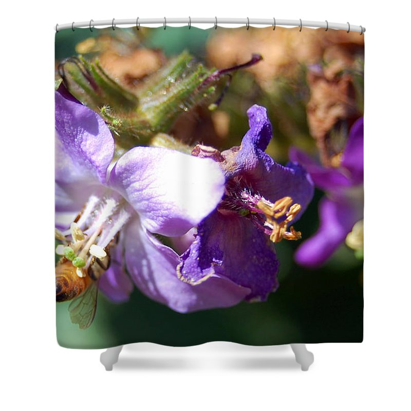 Bee Shower Curtain featuring the photograph Pollinating 3 by Amy Fose