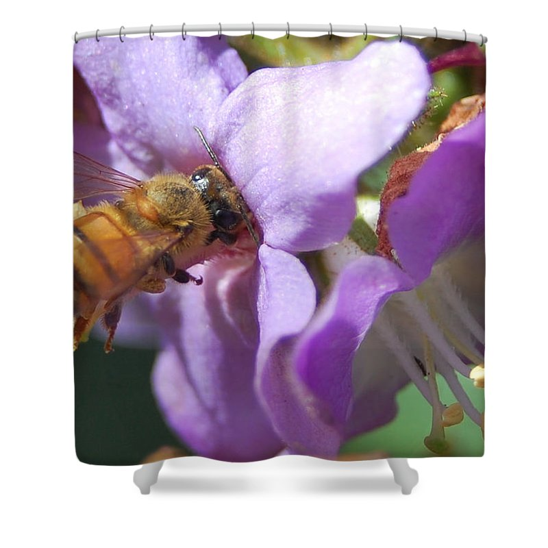 Bee Shower Curtain featuring the photograph Pollinating 5 by Amy Fose
