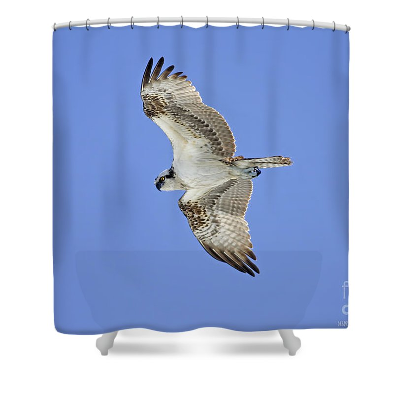 Shower Curtain featuring the photograph Ponce Osprey 1 by Deborah Benoit