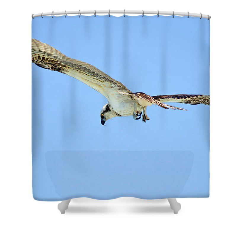 Osprey Shower Curtain featuring the photograph Ponce Osprey 3 by Deborah Benoit