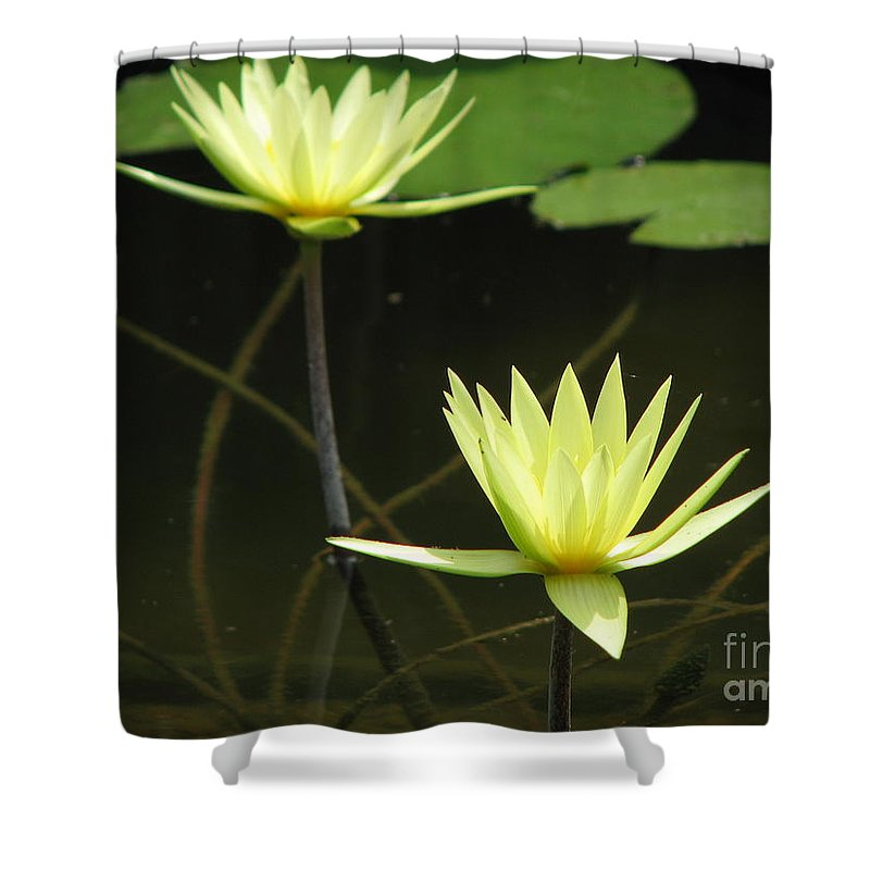 Pond Shower Curtain featuring the photograph Pond by Amanda Barcon