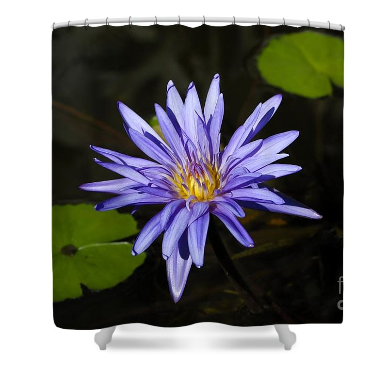Pond Lily Shower Curtain featuring the photograph Pond Lily by David Lee Thompson