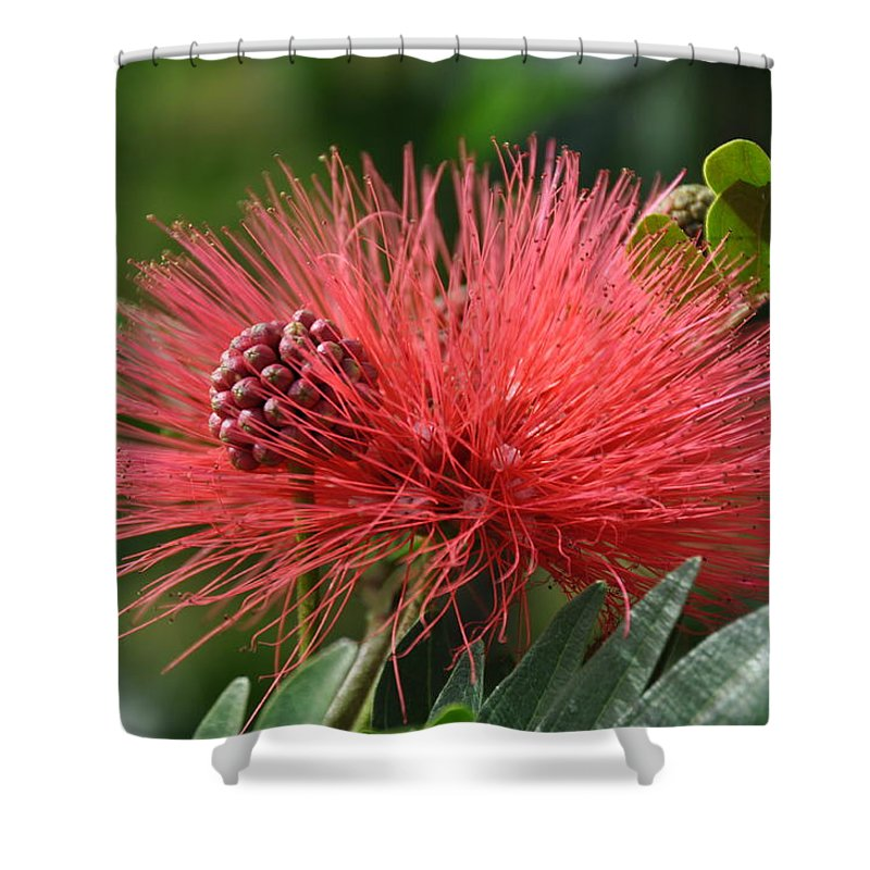 Flower Shower Curtain featuring the photograph Poof by Rich Bodane