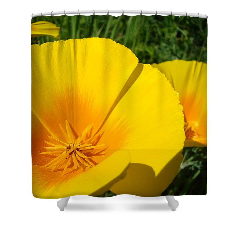 �poppies Artwork� Shower Curtain featuring the photograph Poppies Art Poppy Flowers 4 Golden Orange California Poppies by Baslee Troutman