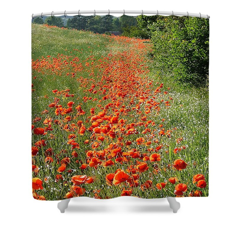 Poppies Shower Curtain featuring the photograph Poppies Awash by Bob Kemp