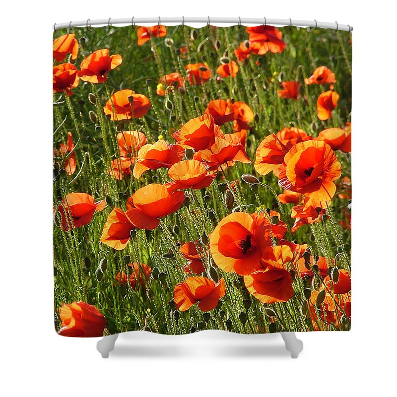 Poppies Shower Curtain featuring the photograph Poppies by Bob Kemp