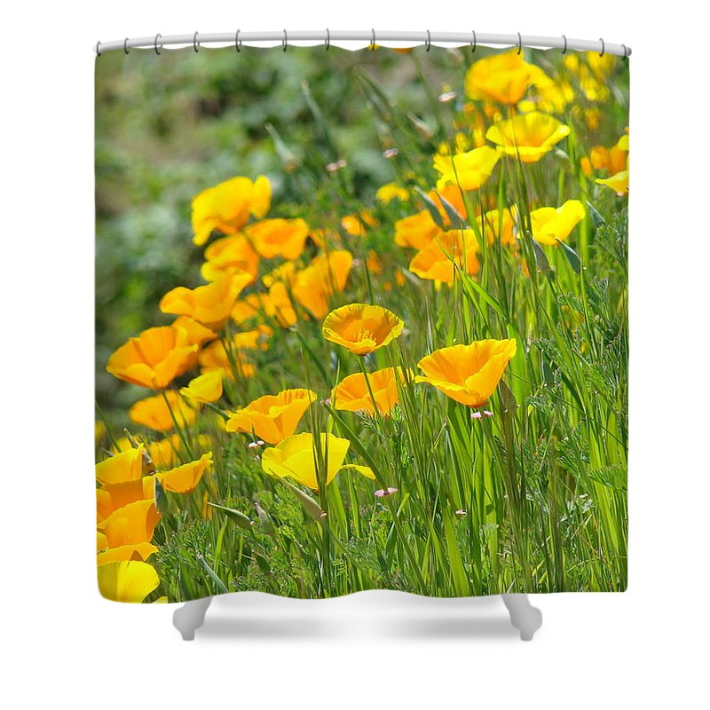 �poppies Artwork� Shower Curtain featuring the photograph Poppies Hillside Meadow Landscape 19 Poppy Flowers Art Prints Baslee Troutman by Baslee Troutman