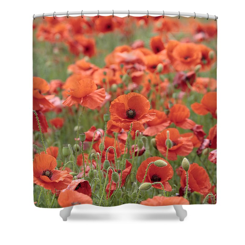 Poppy Shower Curtain featuring the photograph Poppies by Phil Crean