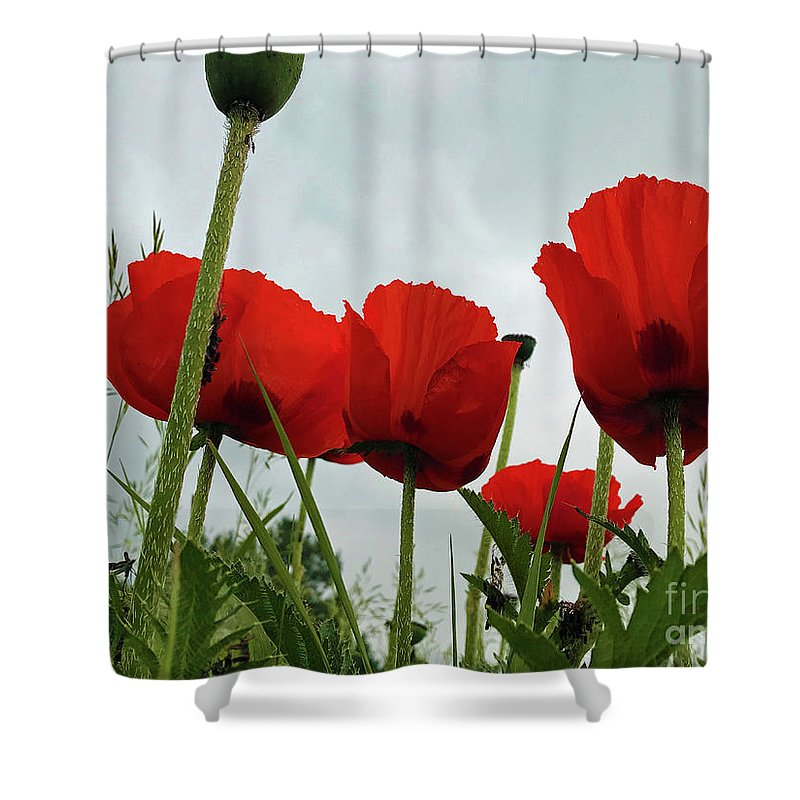 Poppies Shower Curtain featuring the photograph Poppies by Steven Parker