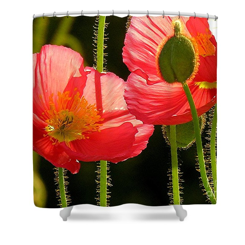 Poppy Shower Curtain featuring the photograph Poppy by Diane Greco-Lesser