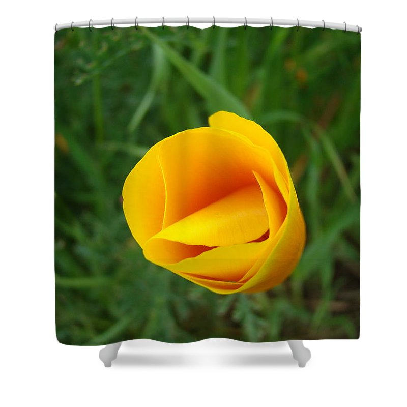 �poppies Artwork� Shower Curtain featuring the photograph Poppy Flower Bud 9 Orange Poppies Green Meadow Art Prints Baslee Troutman by Baslee Troutman