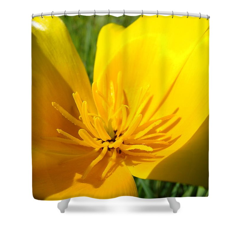 �poppies Artwork� Shower Curtain featuring the photograph Poppy Flower Close Up Macro 20 Poppies Meadow Giclee Art Prints Baslee Troutman by Baslee Troutman