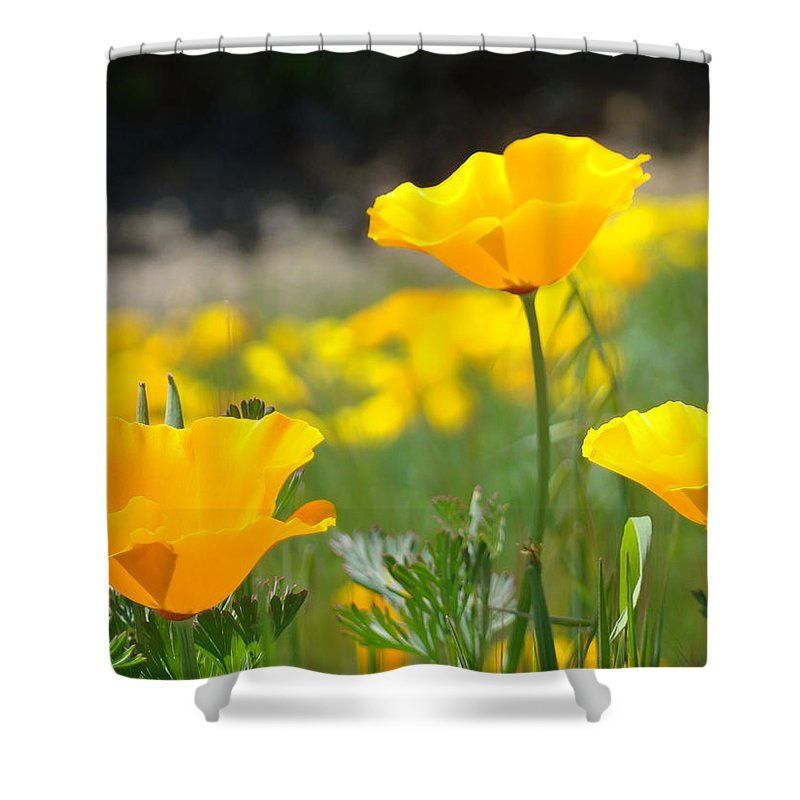 �poppies Artwork� Shower Curtain featuring the photograph Poppy Flower Meadow 11 Poppies Art Prints Canvas Framed by Baslee Troutman