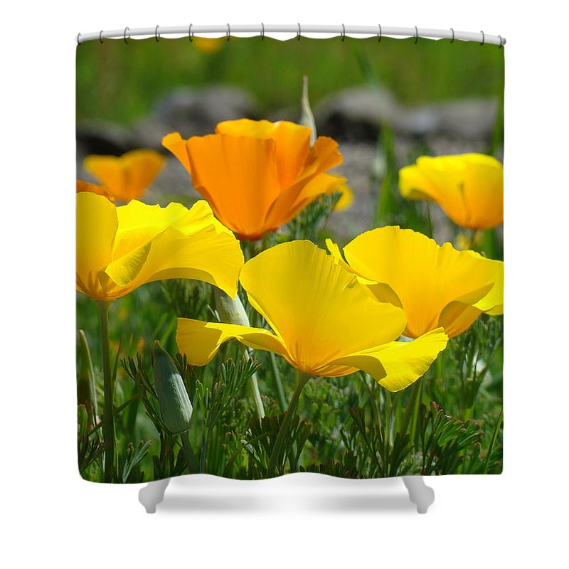 �poppies Artwork� Shower Curtain featuring the photograph Poppy Flower Meadow 14 Poppies Orange Flowers Giclee Art Prints Baslee Troutman by Baslee Troutman