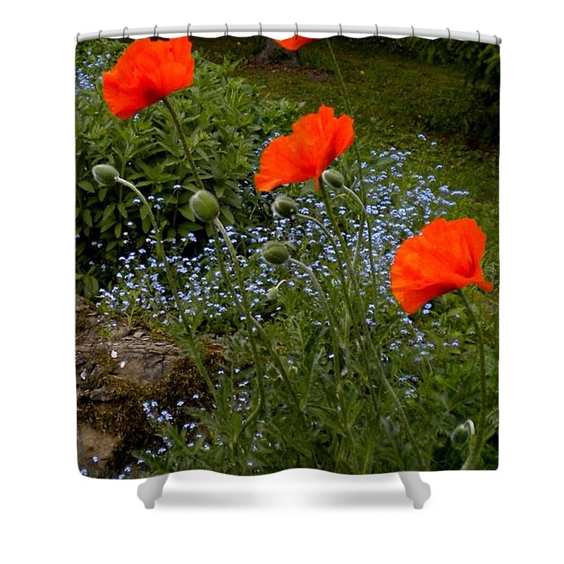 Poppy Shower Curtain featuring the painting Poppy Foursome by Renate Nadi Wesley