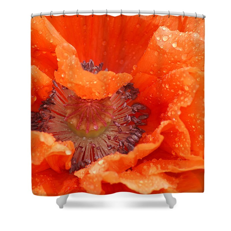 Orange Shower Curtain featuring the photograph Poppy by Heather Coen