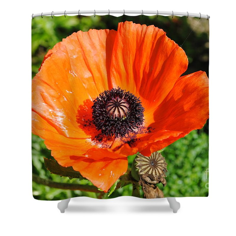 Poppy Shower Curtain featuring the photograph Poppy by Jost Houk