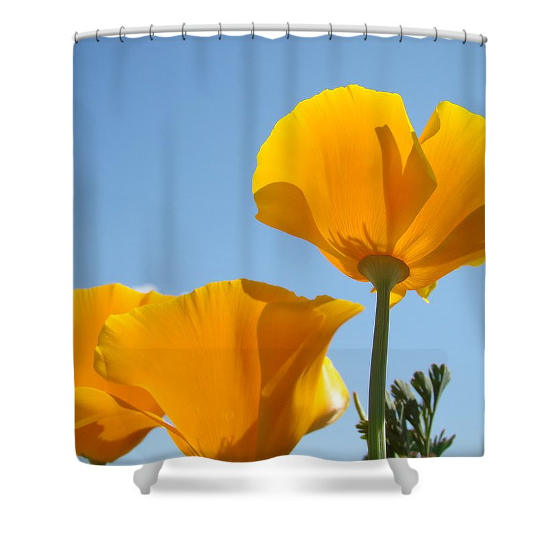 �poppies Artwork� Shower Curtain featuring the photograph Poppy Landscape Poppies Flowers Blue Sky 12 Baslee Troutman by Baslee Troutman