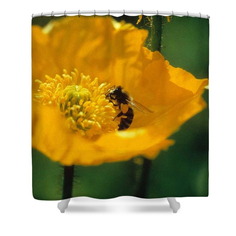 California Poppy Shower Curtain featuring the photograph Poppy With Bee Friend by Laurie Paci