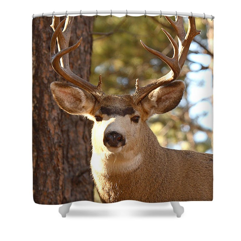Buck Shower Curtain featuring the photograph Portrait Of A 15-point Buck by Max Allen