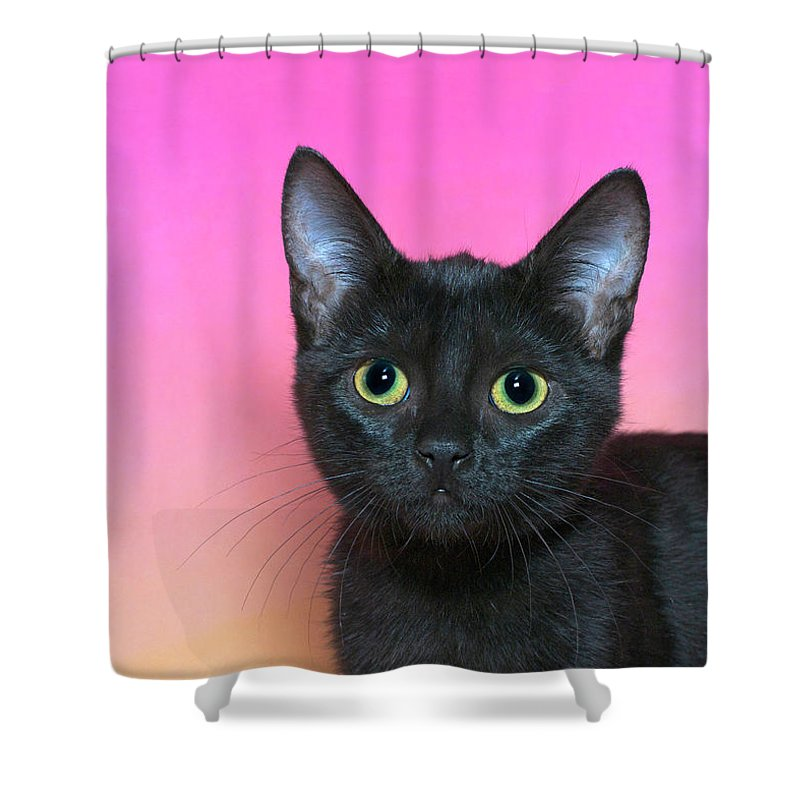 Adorable Shower Curtain featuring the photograph Portrait Of A Black Kitten by Sheila Fitzgerald