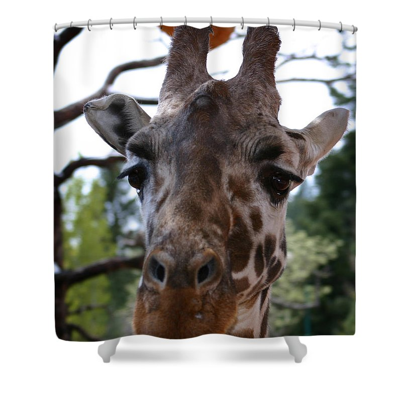 Giraffe Shower Curtain featuring the photograph Portrait Of A Giraffe by Anthony Jones