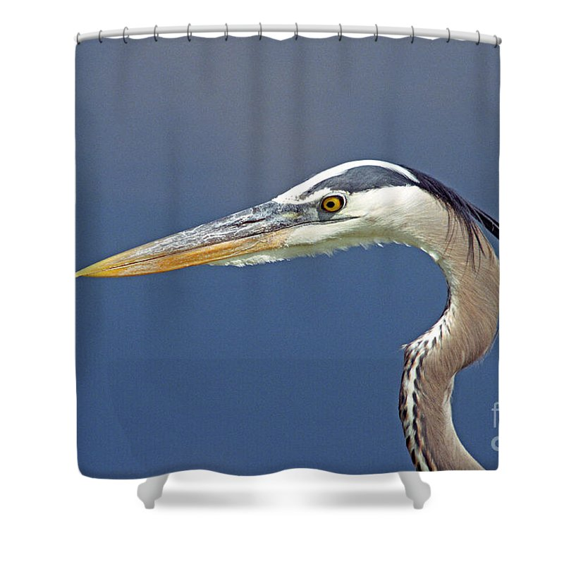 Bird Shower Curtain featuring the photograph Portrait Of A Great Blue Heron by John Harmon