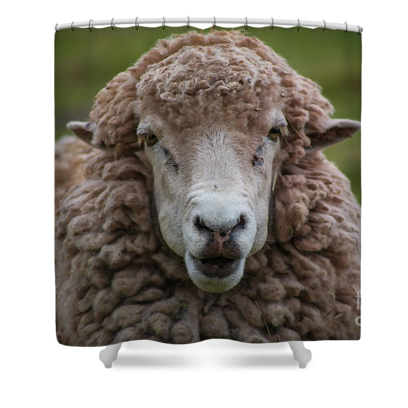 Face Sheep Shower Curtain featuring the photograph Portrait Of A Sheep by Gisell Iriarte