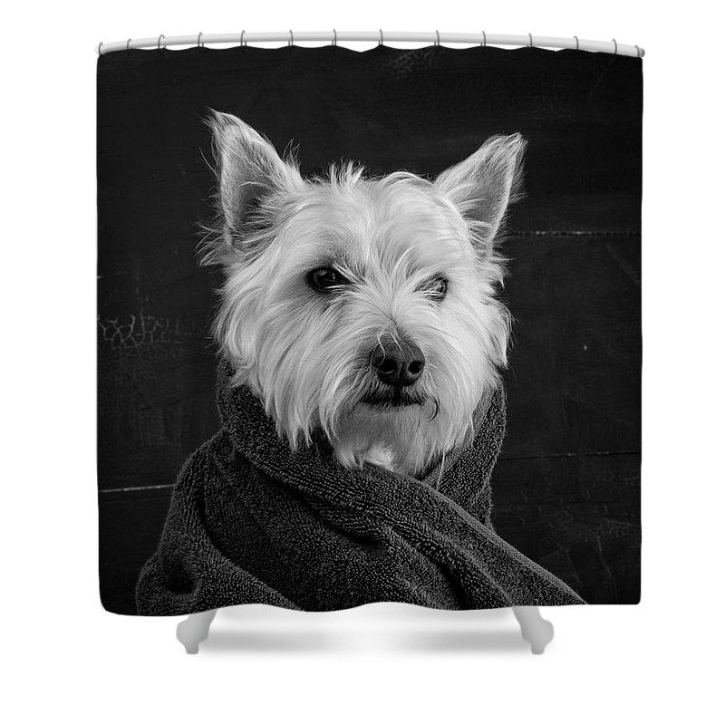 Dogs Portrait Shower Curtains
