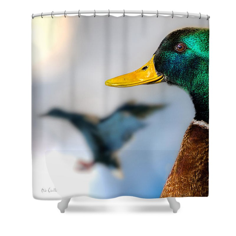 Duck Shower Curtain featuring the photograph Portrait Of Duck 2 by Bob Orsillo