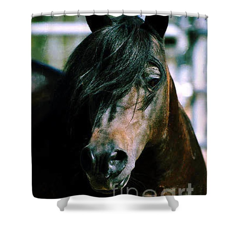 Horse Shower Curtain featuring the photograph Portrait Of His Majesty - The King by Kathy McClure