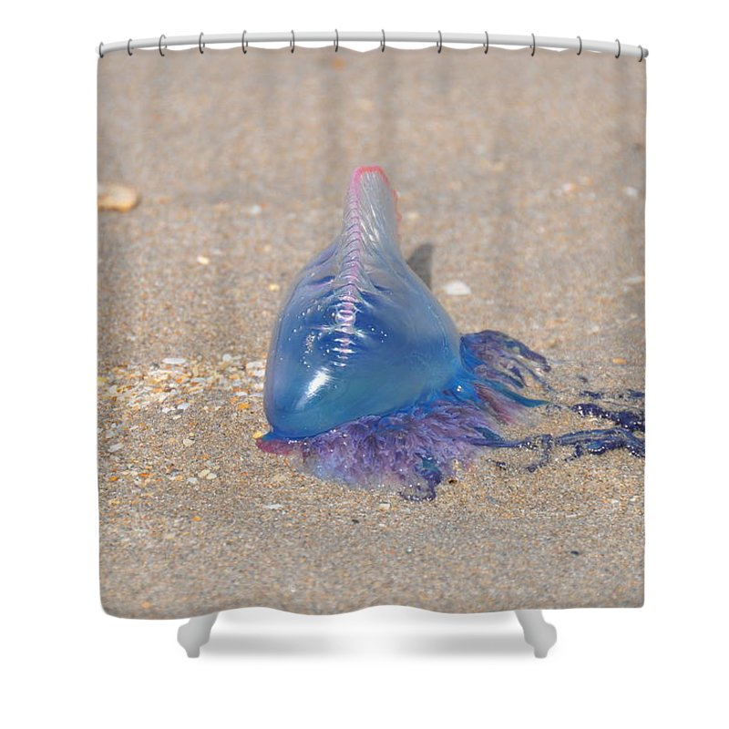 Jellyfish Shower Curtain featuring the photograph Portugese Man O' War 2 by Rich Bodane