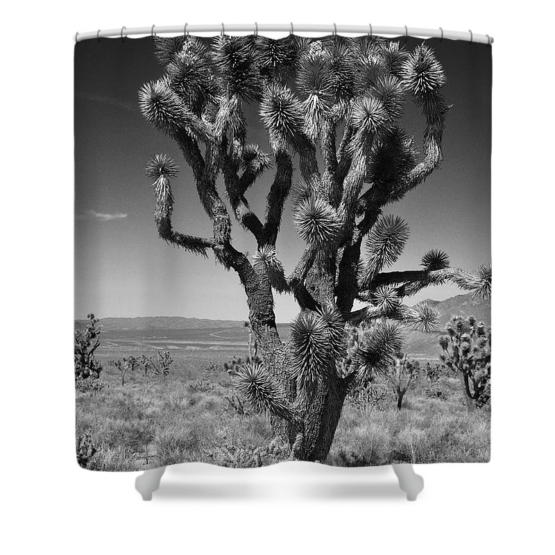 Joshua Trees Shower Curtain featuring the photograph Posing Joshua Trees by Kristen Beck