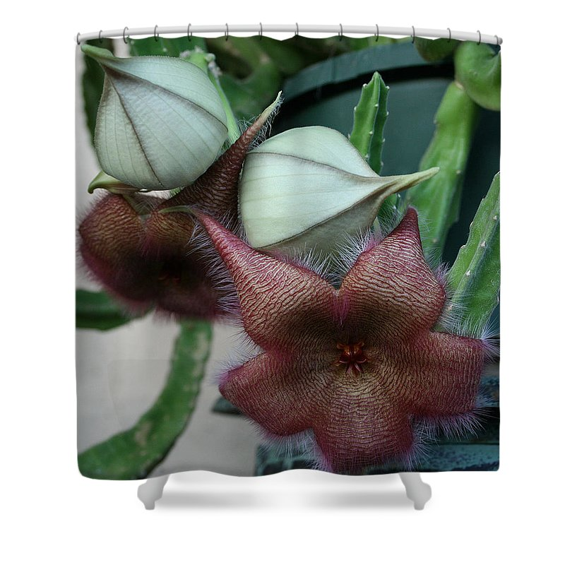 Starfish Shower Curtain featuring the photograph Potted Starfish by Marna Edwards Flavell