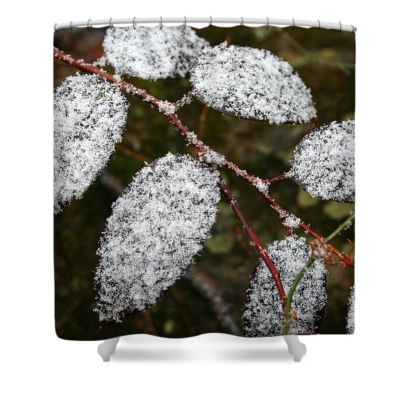 Winter Season Cold Snow Tree Branch Leaf Leaves White Green Frosted Powder Shower Curtain featuring the photograph Powdered by Andrei Shliakhau