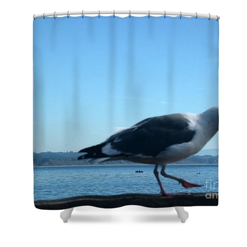 Landscape Shower Curtain featuring the photograph pr 117 - A Seagull On Thr Fence by Chris Berry